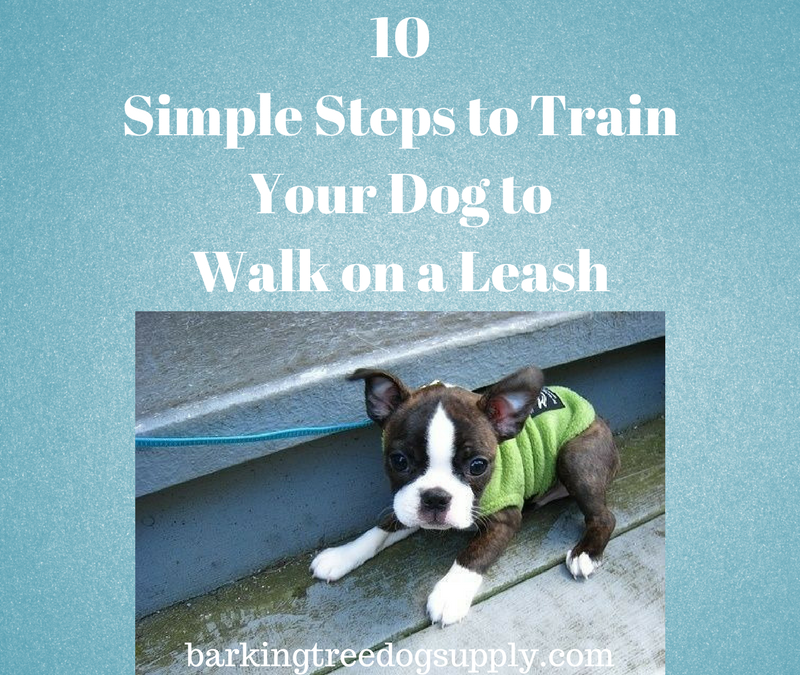 10 simple steps to train your dog to walk on a leash